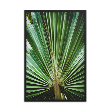 Aged and Colorized Wide Palm Leaves 2 Tropical Nature Photo Framed Wall Art Print