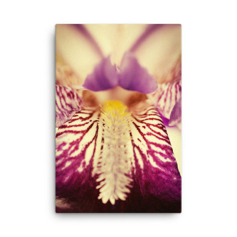 Antiqued Iris Floral Nature Canvas Wall Art Prints