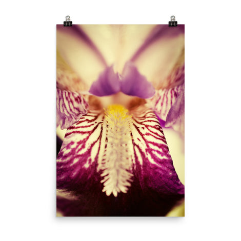 Antiqued Iris Floral Nature Photo Loose Unframed Wall Art Prints