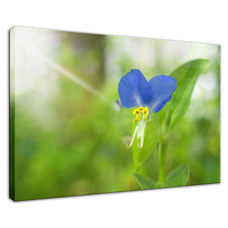Asiatic Day Flower Nature / Floral Photo Fine Art Canvas Wall Art Prints