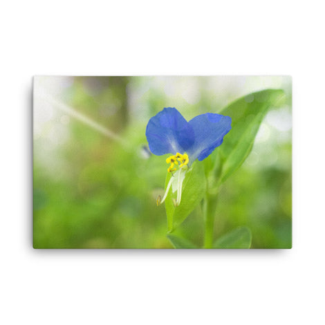 Asiatic Dayflower Floral Nature Canvas Wall Art Prints