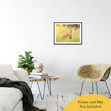 "Baby Red Fox in the Sun Animal / Wildlife Photograph Fine Art Canvas & Unframed Wall Art Prints 20"" x 24"" / Classic Paper - Unframed - PIPAFINEART"