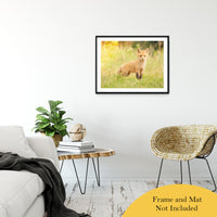 "Baby Red Fox in the Sun Animal / Wildlife Photograph Fine Art Canvas & Unframed Wall Art Prints 24"" x 36"" / Classic Paper - Unframed - PIPAFINEART"