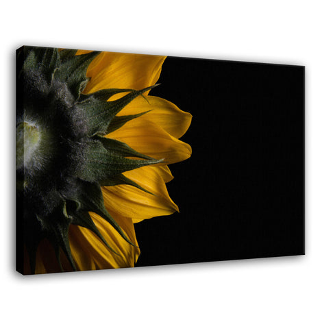 Backside of Sunflower Nature / Floral Photo Fine Art Canvas Wall Art Prints