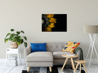 "Backside of Sunflower Nature / Floral Photo Fine Art Canvas Wall Art Prints 24"" x 36"" / Fine Art Canvas - PIPAFINEART"