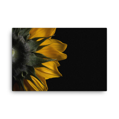 Backside of Sunflower Floral Nature Canvas Wall Art Prints