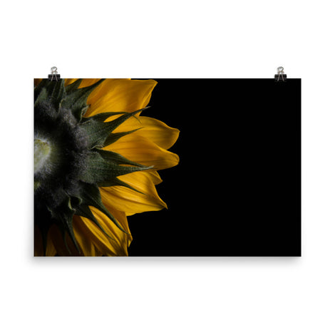 Backside of Sunflower Floral Nature Photo Loose Unframed Wall Art Prints