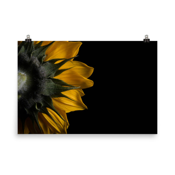 Backside of Sunflower Floral Nature Photo Loose Unframed Wall Art Prints  - PIPAFINEART
