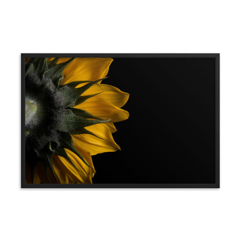 Backside of Sunflower Minimal Floral Nature Photo Framed Wall Art Print
