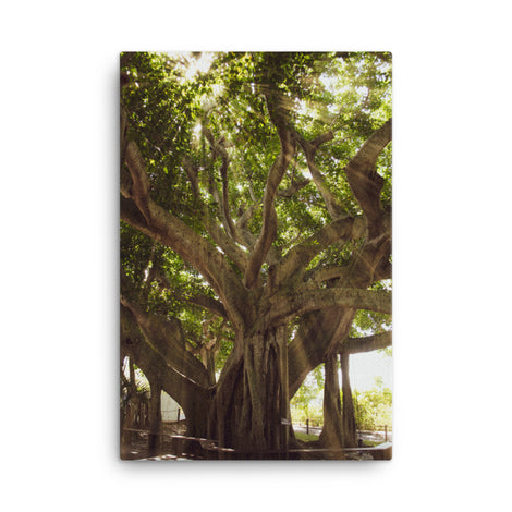 Banyan Tree With Glory Rays of Sunlight Botanical Nature Canvas Wall Art Prints