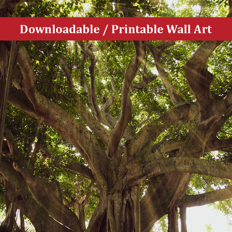 Banyan Tree With Glory Rays of Sunlight Botanical Nature Photo DIY Wall Decor Instant Download Print - Printable