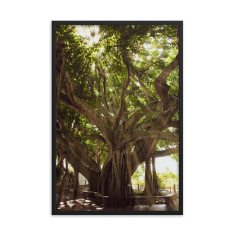 Banyan Tree With Glory Rays of Sunlight Tropical Botanical Nature Photo Framed Wall Art Print
