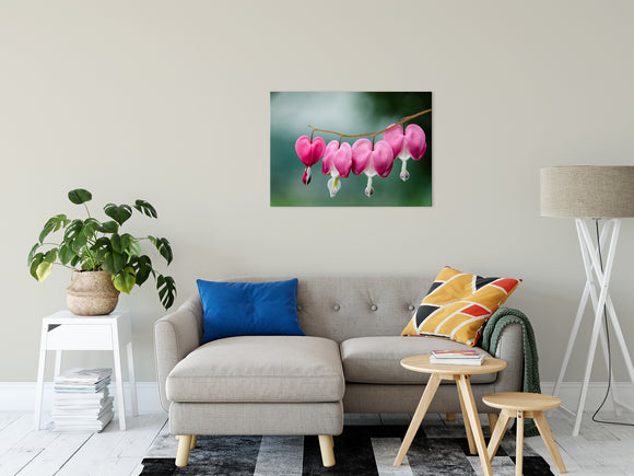 Floral Nature Photograph Be Still My Bleeding Heart - Fine Art Canvas - Home Decor Unframed Wall Art Prints