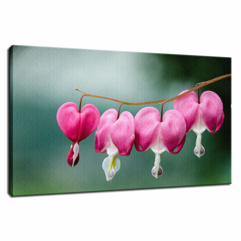 Be Still My Bleeding Heart Nature / Floral Photo Fine Art Canvas Wall Art Prints