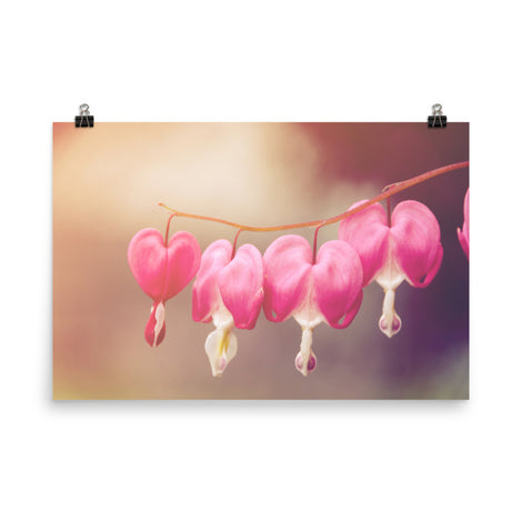 Be Still My Bleeding Heart Warm Summer Glow Floral Nature Photo Loose Unframed Wall Art Prints