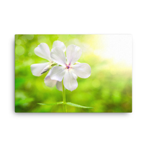 Beauty of the Forest Floor Floral Nature Canvas Wall Art Prints