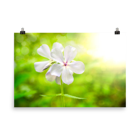 Beauty of the Forest Floor Floral Nature Photo Loose Unframed Wall Art Prints