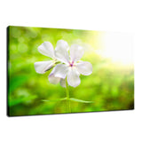 Beauty of the Forest Floor Nature / Floral Photo Fine Art Canvas Wall Art Prints  - PIPAFINEART