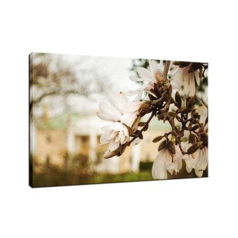 Bellevue Mansion Nature / Floral Photo Fine Art Canvas Wall Art Prints