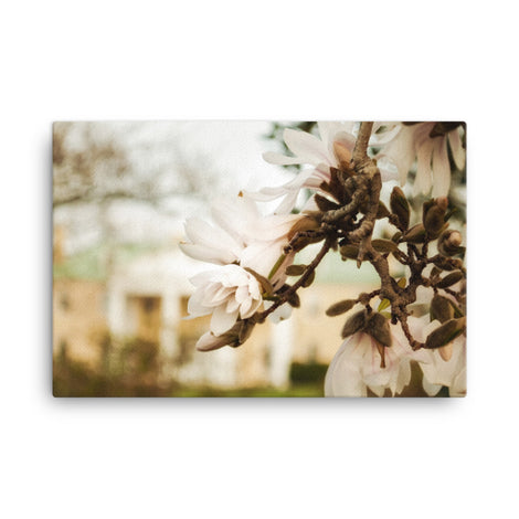 Bellevue Mansion Magnolia Blooms Floral Nature Canvas Wall Art Prints