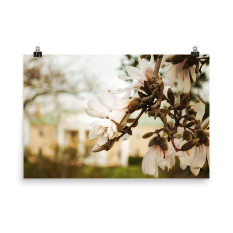 Bellevue Mansion Magnolias Floral Nature Photo Loose Unframed Wall Art Prints