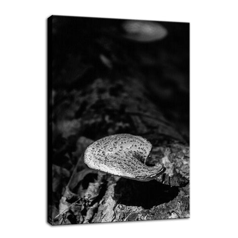 Mushroom on Log in Black & White Botanical Photo Fine Art Canvas Wall Art Prints