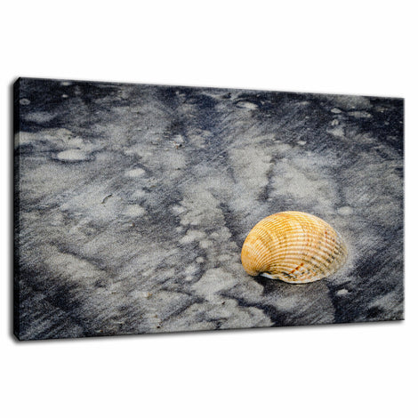 Black Sands and Seashell on the Shore Coastal Nature Photo Fine Art Canvas Wall Art Prints