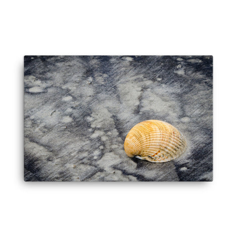 Black Sands and Seashell on the Shore Coastal Nature Canvas Wall Art Prints