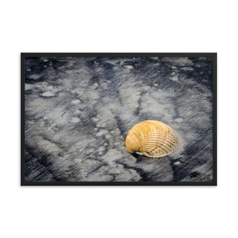 Black Sands and Seashell on the Shore Coastal Nature Photo Framed Wall Art Print