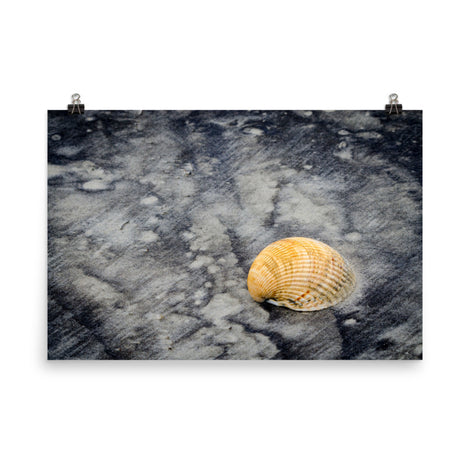 Black Sands and Seashell on the Shore Coastal Nature Photo Loose Unframed Wall Art Prints