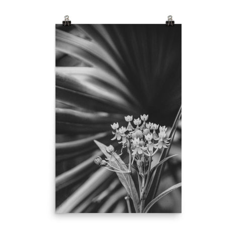 Bloodflowers and Palm Black and White Floral Nature Photo Loose Unframed Wall Art Prints
