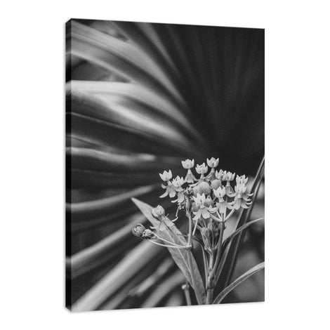 Bloodflowers & Palm Black & White Floral Photo Fine Art Canvas Wall Art Prints