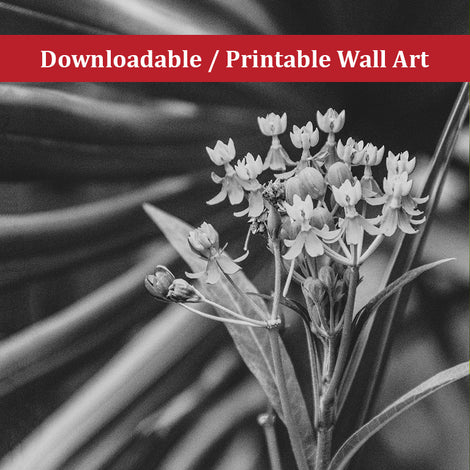 Bloodflowers and Palm Black and White Nature Photo DIY Wall Decor Instant Download Print - Printable