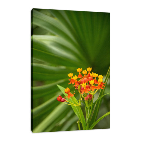Bloodflowers & Palm Color Floral Nature Photo Fine Art Canvas Wall Art Prints