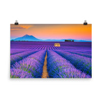 Blooming Lavender Field and Sunset Floral Rural / Farmhouse / Country Style Landscape Scene Photo Loose (Unframed) Wall Art Prints