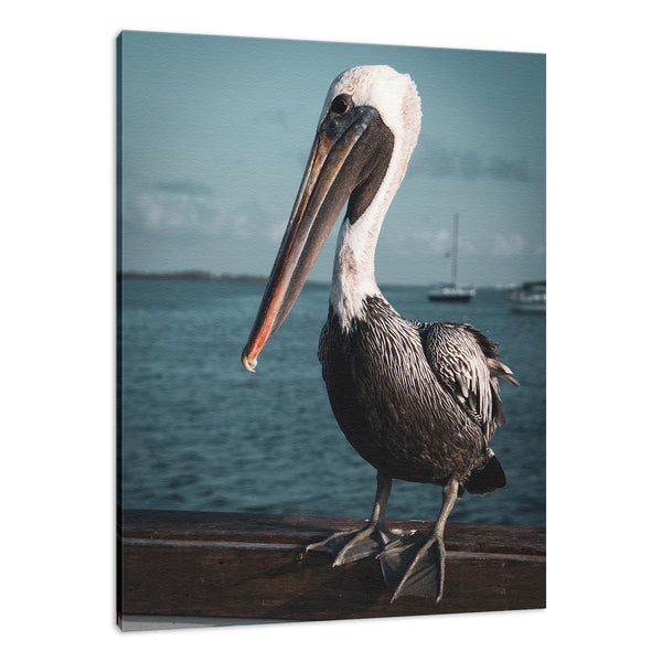 Bob The Pelican 2 Colorized Wildlife Photograph Fine Art Canvas & Unframed Wall Art Prints - PIPAFINEART