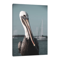 Bob The Pelican 3R Colorized Wildlife Photograph Fine Art Canvas & Unframed Wall Art Prints  - PIPAFINEART