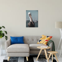 "Bob The Pelican 3R Colorized Wildlife Photograph Fine Art Canvas & Unframed Wall Art Prints 20"" x 30"" / Canvas Fine Art - PIPAFINEART"