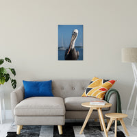 "Bob The Pelican 3 Color Wildlife Photograph Fine Art Canvas & Unframed Wall Art Prints 20"" x 24"" / Canvas Fine Art - PIPAFINEART"