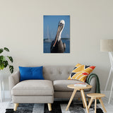 "Bob The Pelican 3 Color Wildlife Photograph Fine Art Canvas & Unframed Wall Art Prints 24"" x 36"" / Canvas Fine Art - PIPAFINEART"