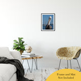"Bob The Pelican 3 Color Wildlife Photograph Fine Art Canvas & Unframed Wall Art Prints 16"" x 20"" / Classic Paper - Unframed - PIPAFINEART"