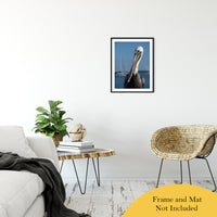 "Bob The Pelican 3 Color Wildlife Photograph Fine Art Canvas & Unframed Wall Art Prints 20"" x 24"" / Classic Paper - Unframed - PIPAFINEART"
