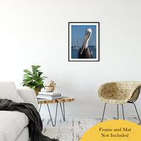 "Bob The Pelican 3 Color Wildlife Photograph Fine Art Canvas & Unframed Wall Art Prints 20"" x 30"" / Classic Paper - Unframed - PIPAFINEART"