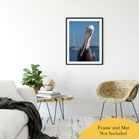 "Bob The Pelican 3 Color Wildlife Photograph Fine Art Canvas & Unframed Wall Art Prints 24"" x 36"" / Classic Paper - Unframed - PIPAFINEART"
