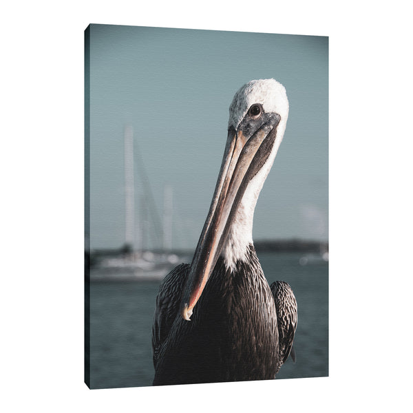 Bob The Pelican 3 Colorized Wildlife Photograph Fine Art Canvas & Unframed Wall Art Prints
