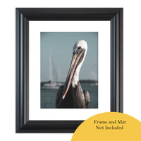 Bob The Pelican 3 Colorized Wildlife Photograph Fine Art Canvas & Unframed Wall Art Prints - PIPAFINEART