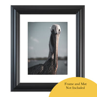Bob The Pelican Colorized Wildlife Photograph Fine Art Canvas & Unframed Wall Art Prints  - PIPAFINEART