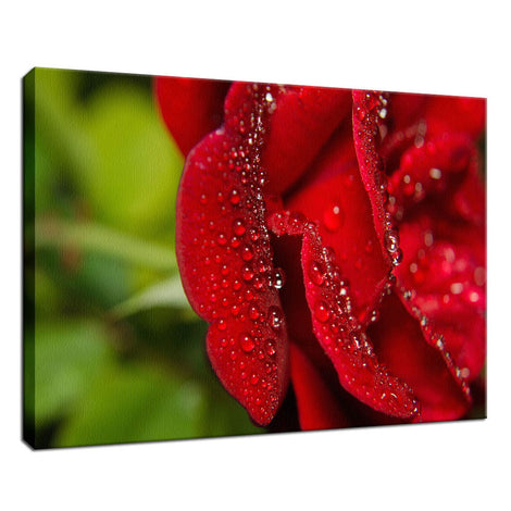 Bold and Beautiful Nature / Floral Photo Fine Art Canvas Wall Art Prints