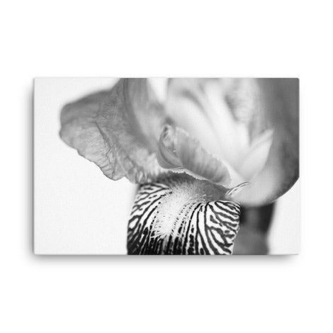 Bold Iris on White Black and White Floral Nature Canvas Wall Art Prints