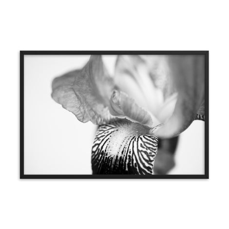 Bold Iris on White Black and White Floral Nature Photo Framed Wall Art Print